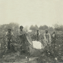 Cotton pickers in slavery